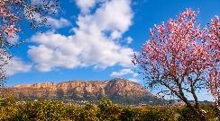 Natuur aan de voet van de berg Montgó Javea
