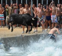 Stieren in het water Javea